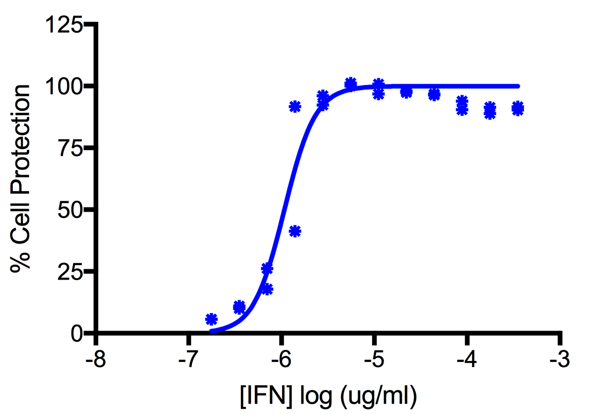 Titration of Human Interferon Alpha B2 (Alpha 8) in the A549 Cell Line