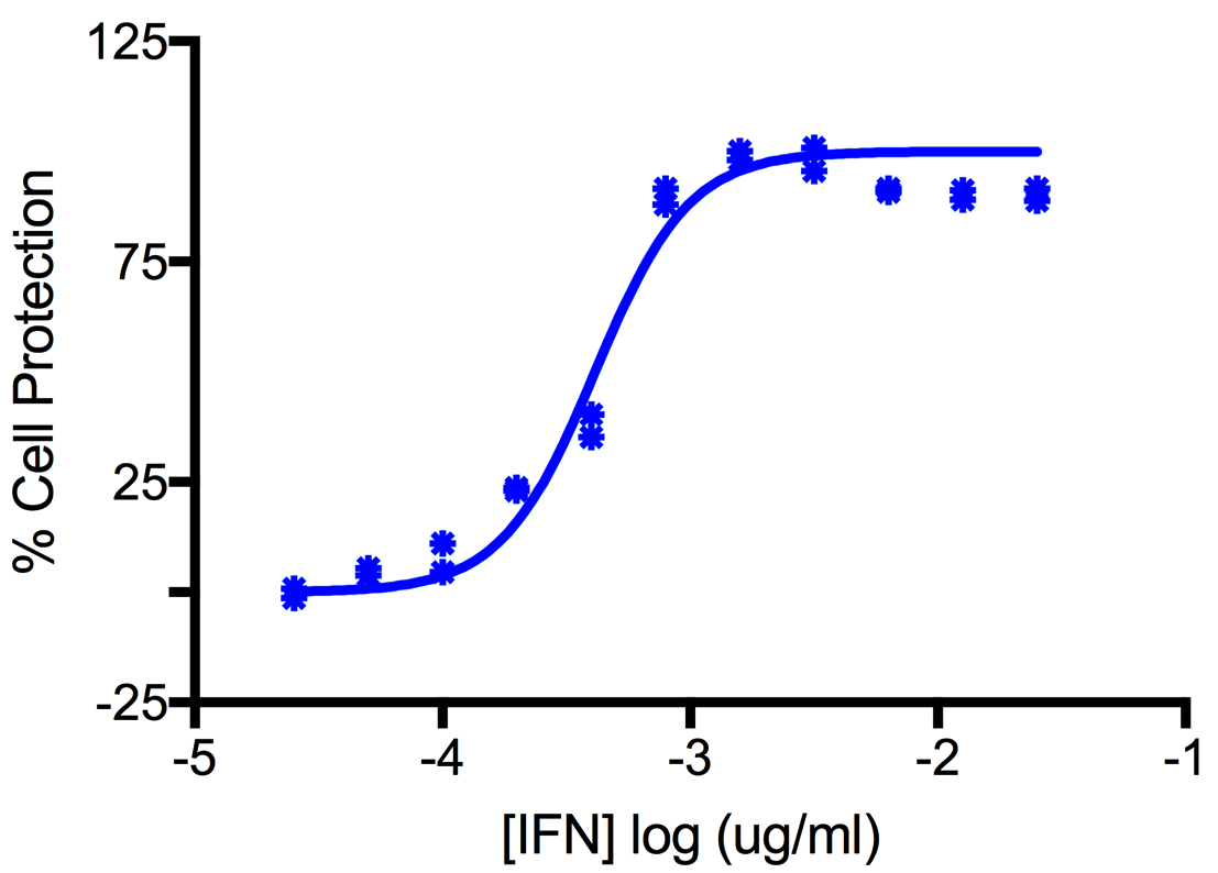 Titration of Rat Interferon Gamma in the L929 Cell Line