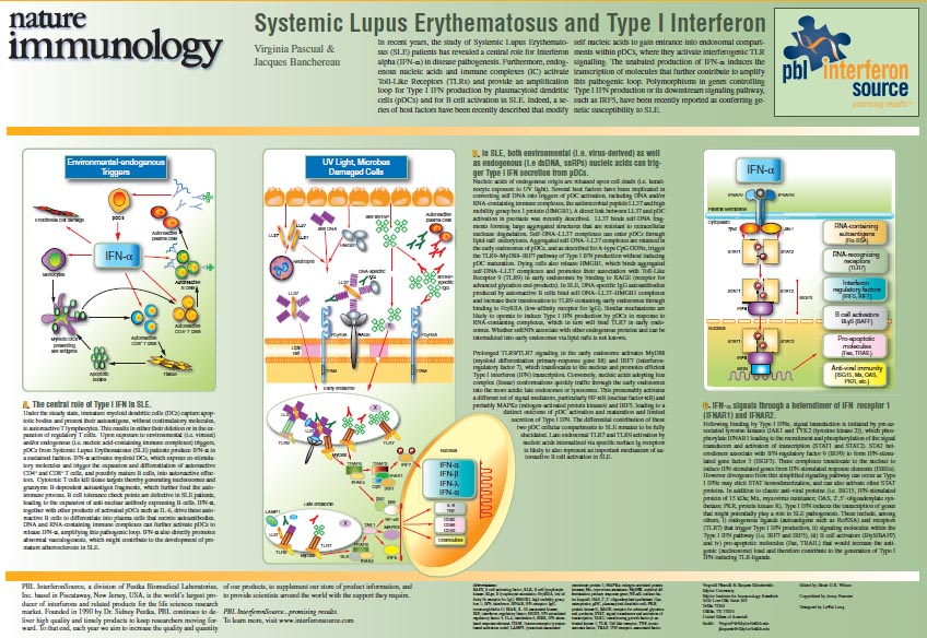 Systemic Lupus Erythematosus and Type I Interferon