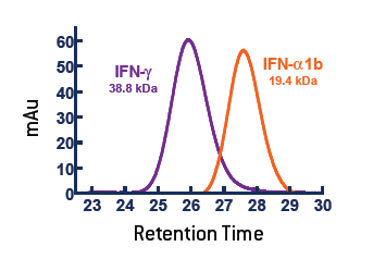 The active form of purified IFN-γ (11500) runs as a homodimer on SEC-HPLC