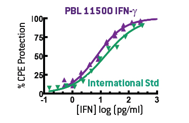Purified homodimeric IFN-γ (11500) closely mimics the biological activity of the International Standard in a CPE assay.