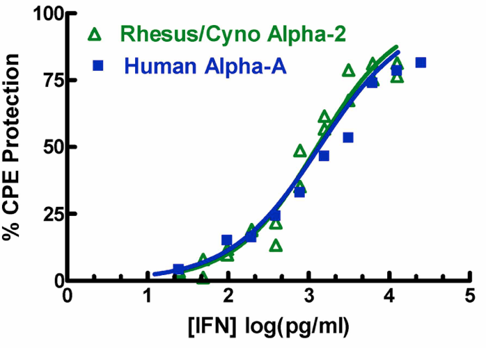Rhesus/Cynomolgus IFN Alpha 2 (14110) and Human IFN Alpha A antiviral activities on an NHP cell line with VSV in a CPE